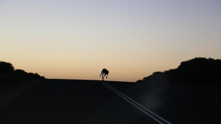 kangoeroe 4